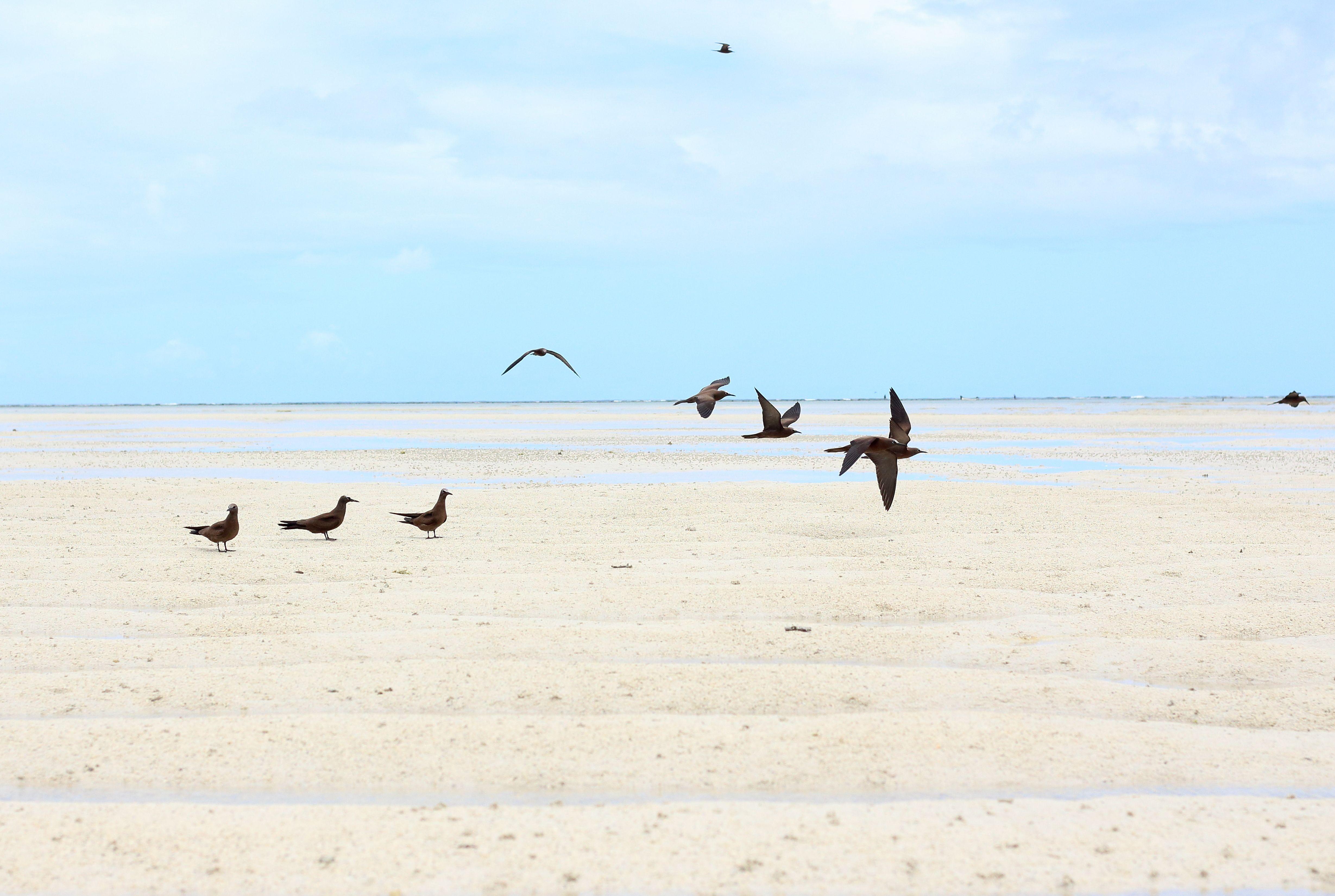 Rodrigues | Ile aux Cocos | Natural Bird Reserve
