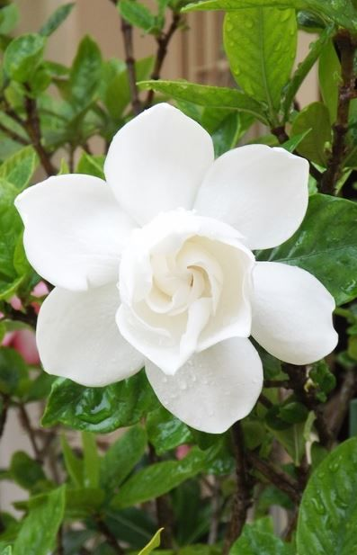 Top 35 Most Beautiful White Flowers With Pictures Types Of White Flowers Small White Flowers Flower Garden Design