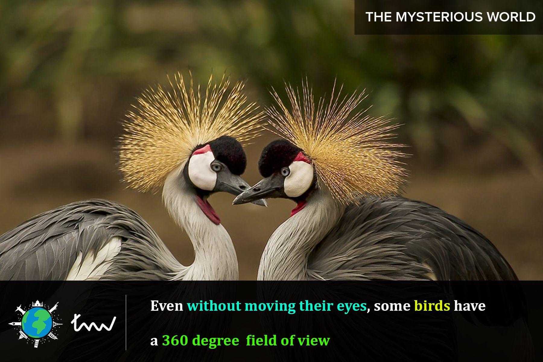 birds animals facts Birds, Beautiful birds, Animals wild