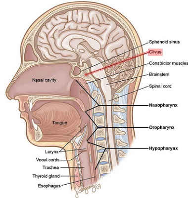 Paul Coogan Clivus Chordoma What Where Is The Clivus Brain Anatomy Muscle Anatomy Radiology Imaging