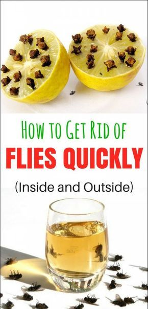 How to get rid of flies quickly (inside and outside)   Get ...