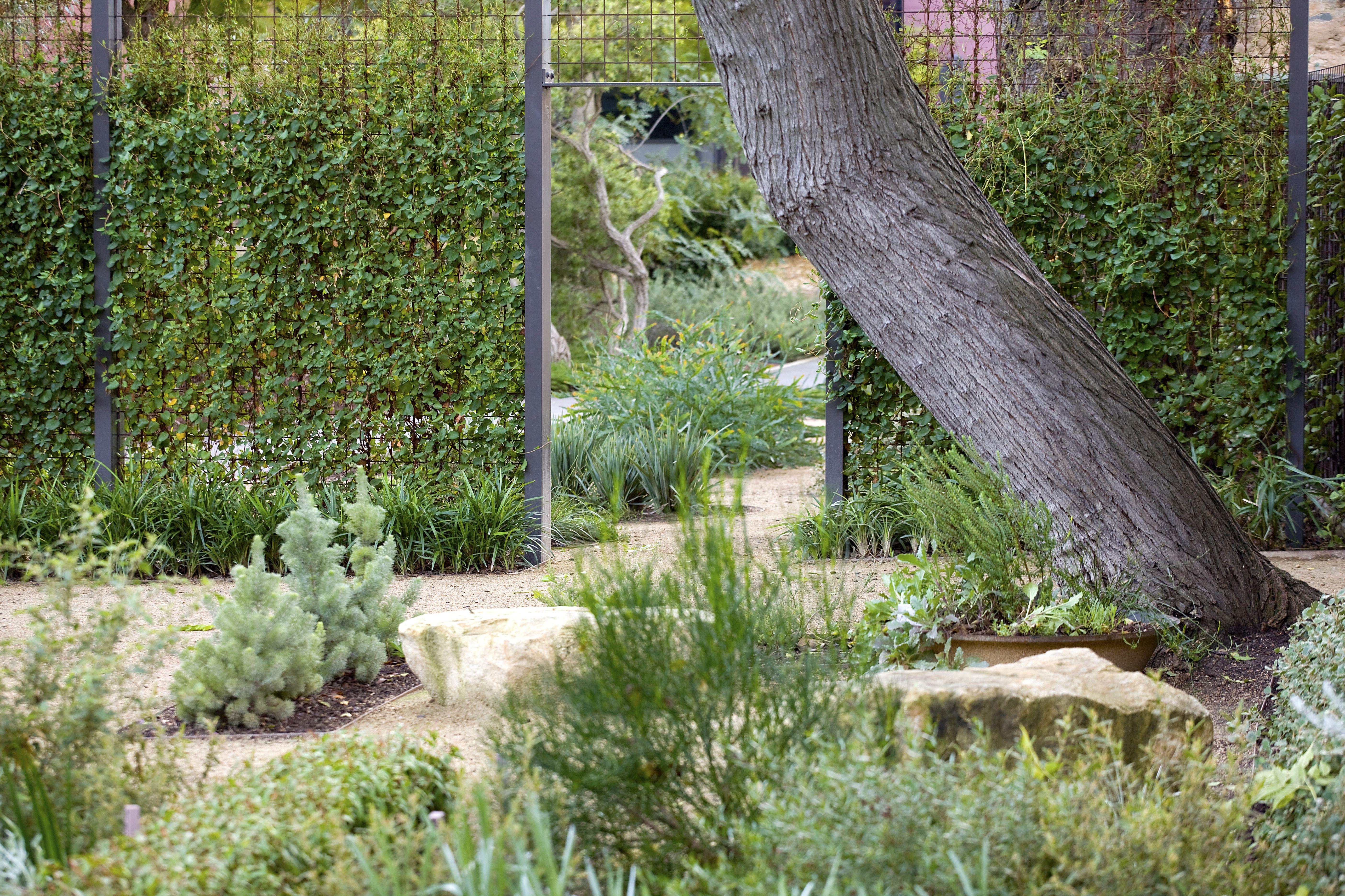 Genial Australian Native Garden, Adelaide Botanical Gardens, Adelaide,