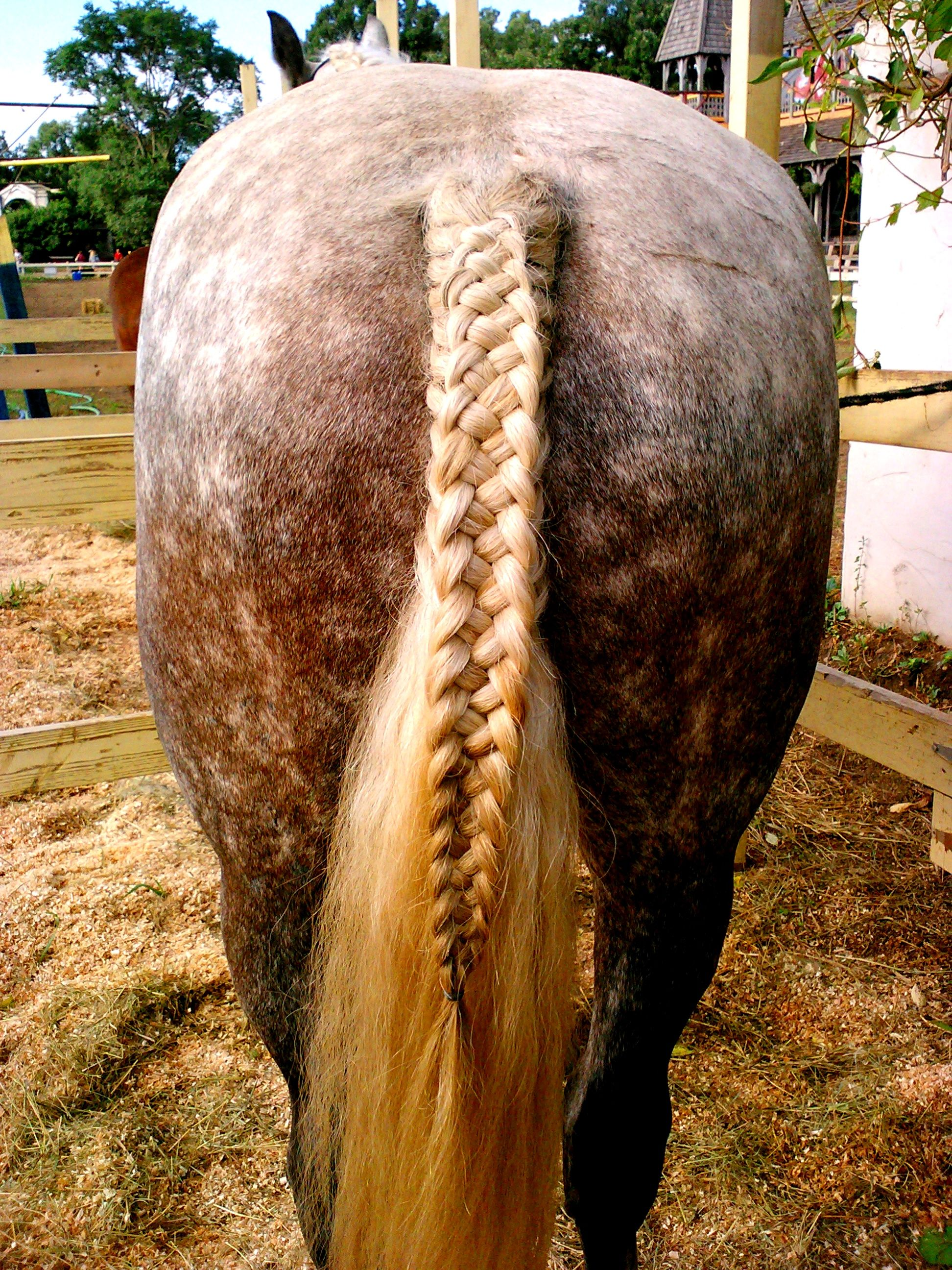 five stranded horse tail braids