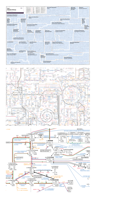 edward tufte forum links causal arrows networks [ 792 x 1224 Pixel ]