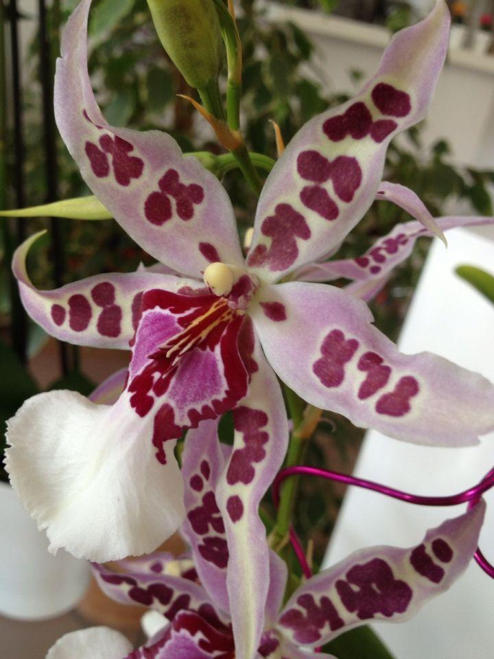 Orchidee spettacolo della natura