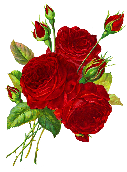 Rose Clipart Roses Drawing Rose Clipart Beautiful Flowers Images