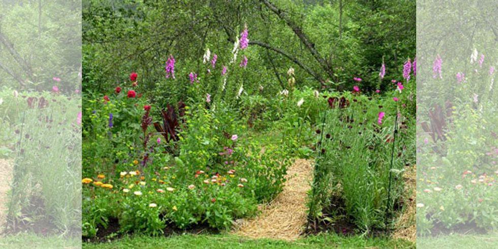 7 Habits of Successful Gardeners #gardening #garden #DIY #home #flowers #roses #nature #landscaping #horticulture