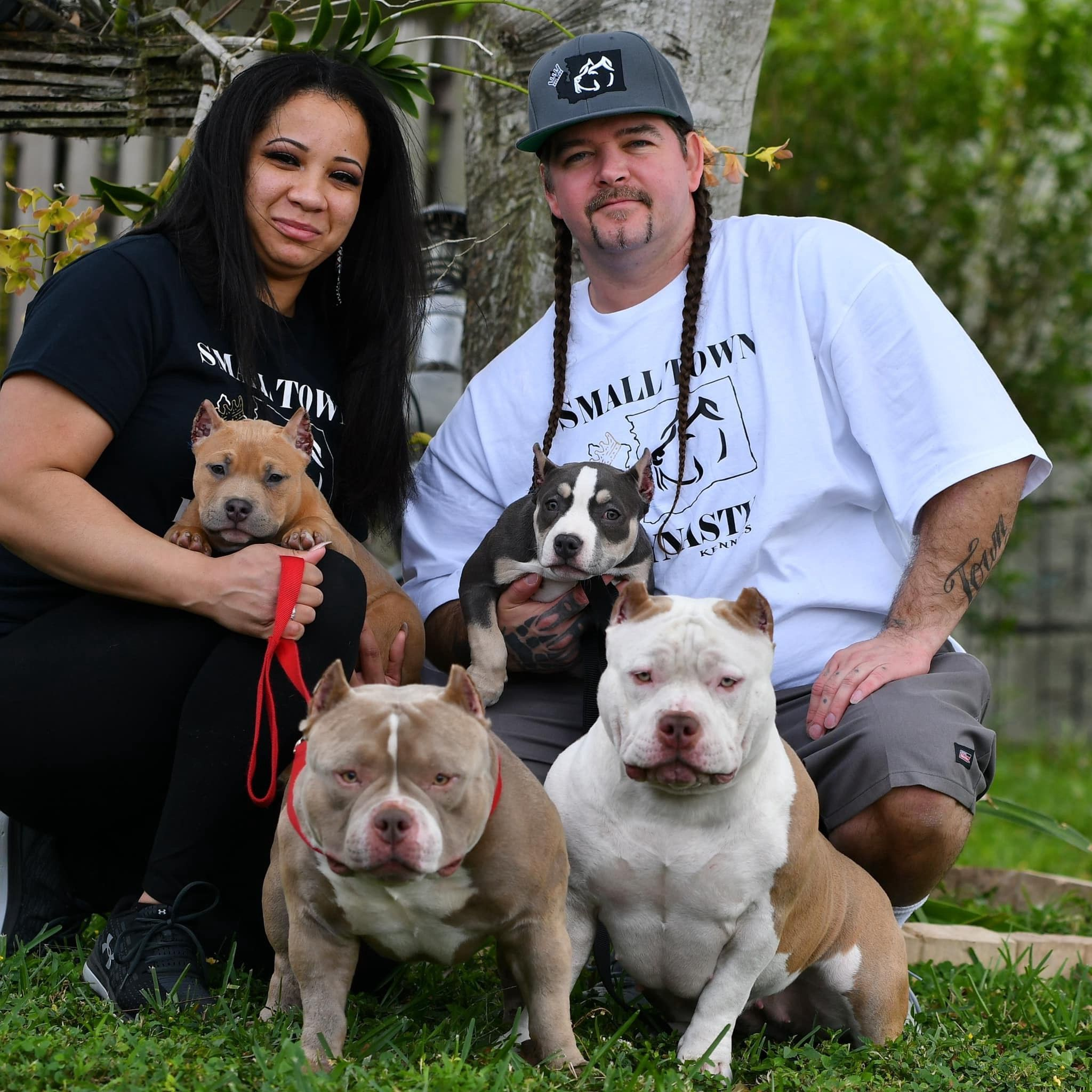 American Bully Breedings The Best Pocket Bully Puppies For Sale