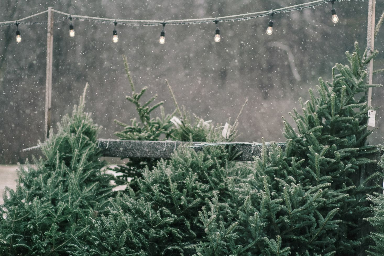 10 Things Nobody Tells You About Christmas Trees Christmas Tree Farm Christmas In England Christmas Place