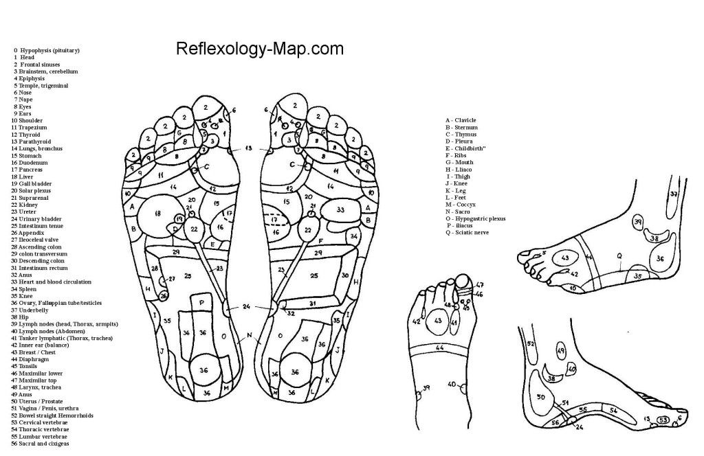 The foot reflexology map in pdf file alternative health