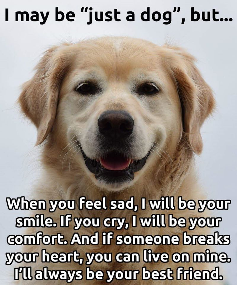I am not just a dog...I'm love ♥ | Doggies | Pinterest | Love is ...