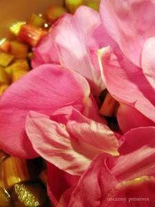 Rhubarb and Rose Petal Preserve