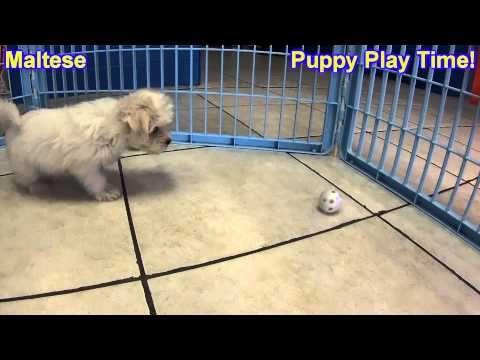 Youtube Grand Island Puppies Nebraska