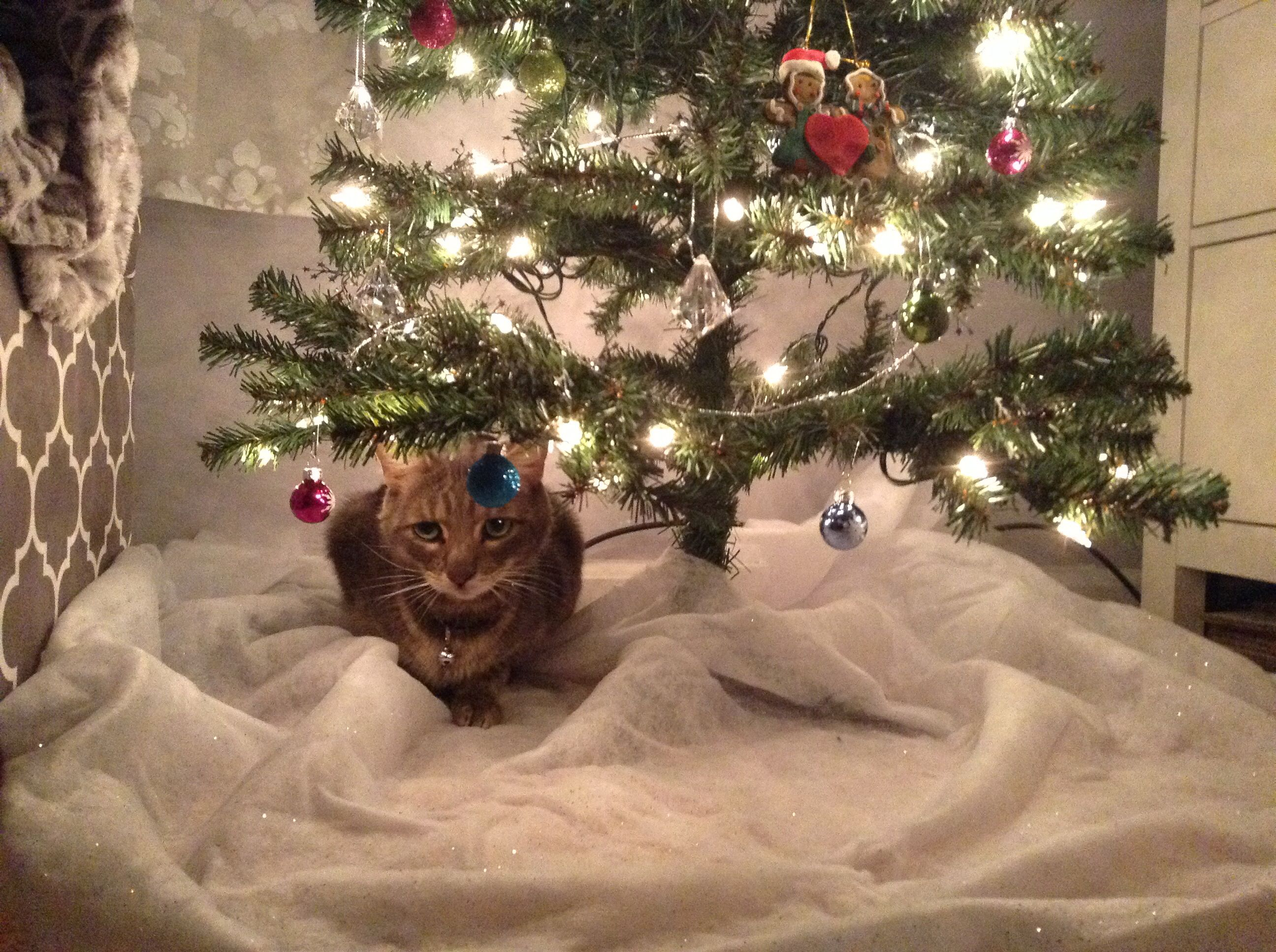 Always the first thing under the tree....well he is the gift that keeps on giving...Nibbles was recently very sick and we almost lost him so even if he is the only thing under my tree this year I'll be more than happy