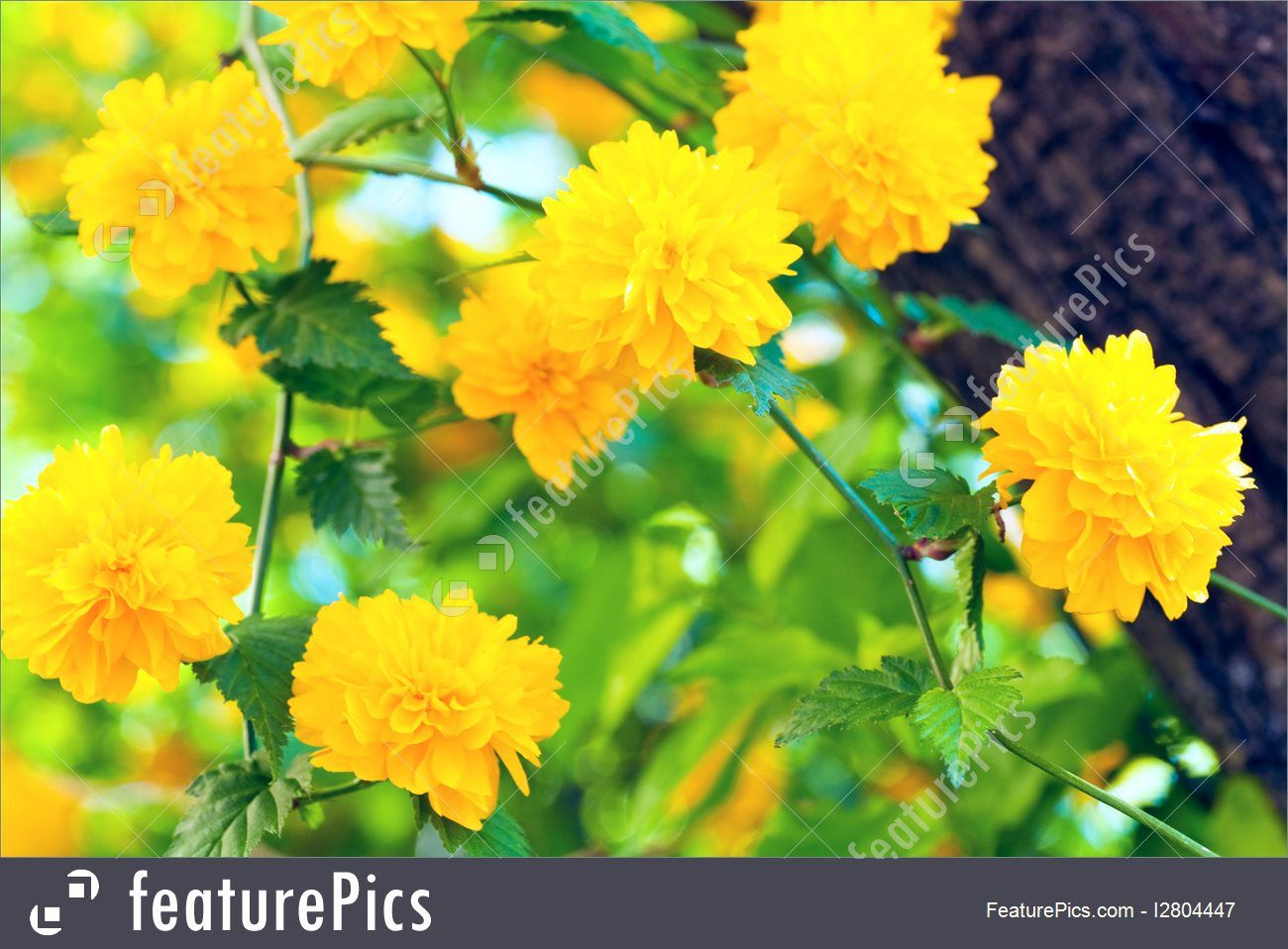 Image Result For Yellow Flowering Bush In Spring Botanicals