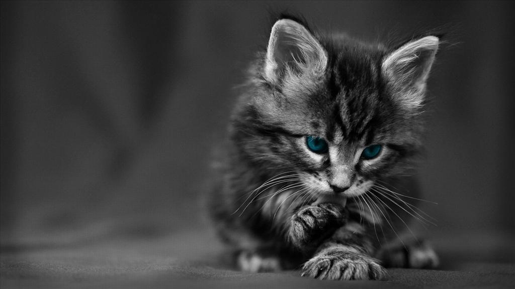 Telecharger Gratuitement Ce Fond D Ecran Cute Kittens Photo Chat Animales