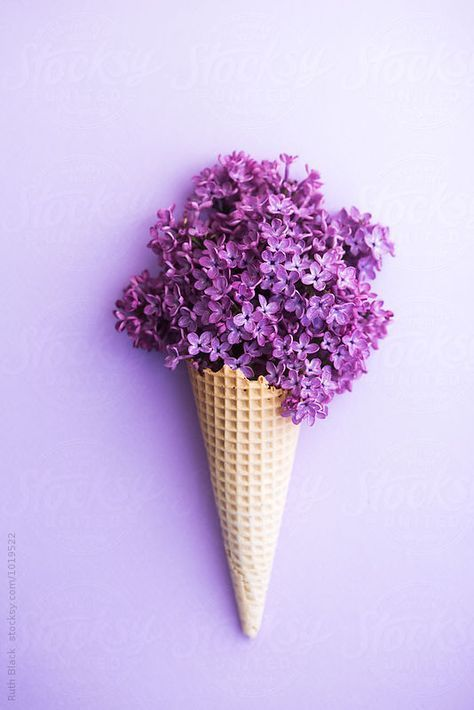 Lilacs in a wafer ice cream cone by Ruth Black  - Lilac, Ice-cream cone - Stocksy United