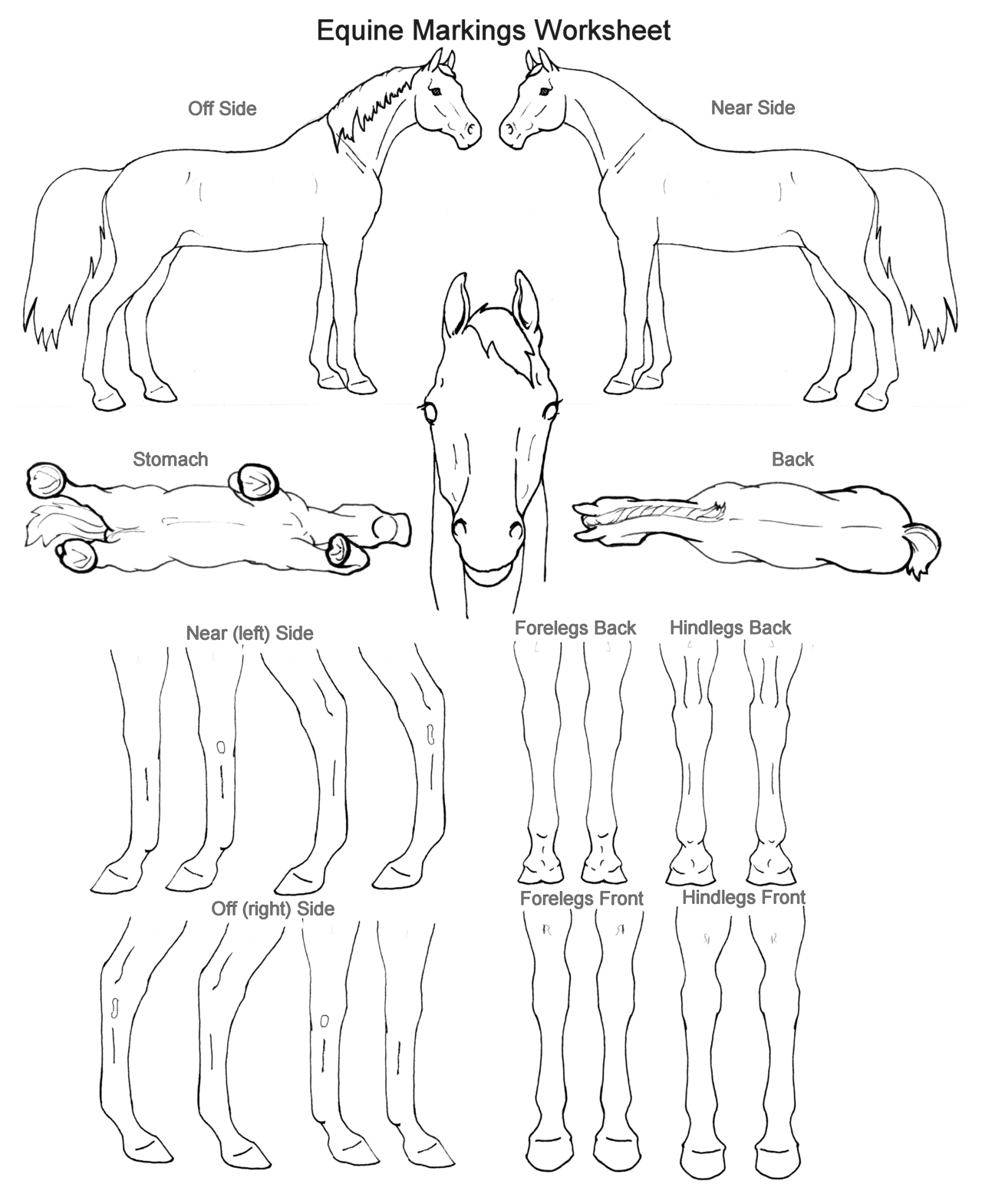 Worksheets Horse Anatomy Worksheet equine markings worksheet from breed registration form horsemastership glenlyon pony club
