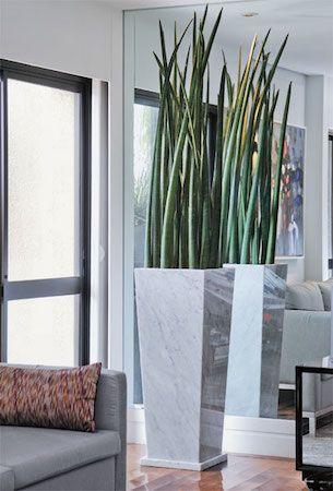 Plantas grandes são perfeitas para decorar ambientes maiores. Se você gosta, precisa conhecer nossas dicas para escolher a planta certa para sua casa!