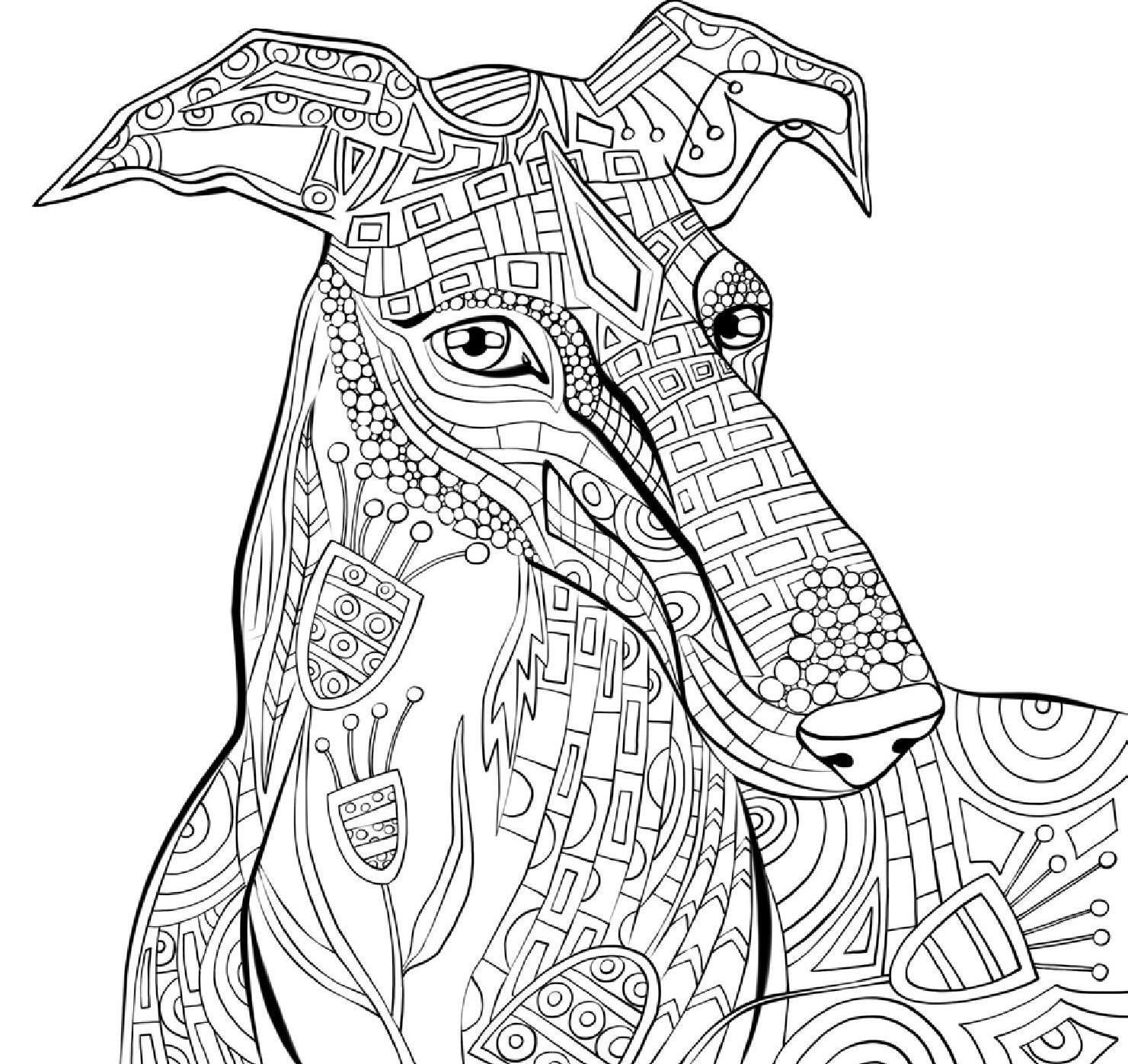 Um reino de cores | Imagenes de perros, Mandalas y Corte de pelo