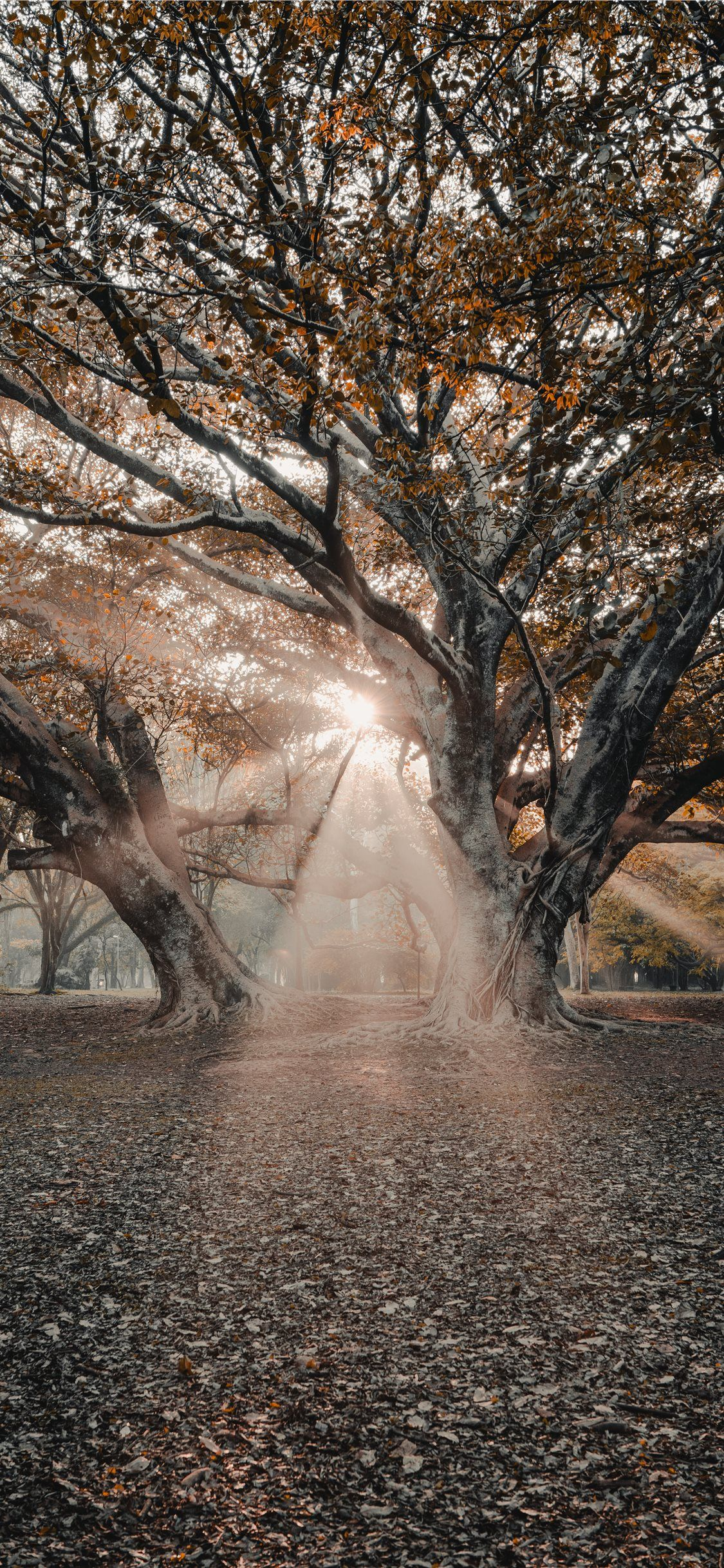 sunlight passing through tree branches tree nature