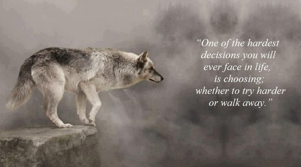 Life Inspiration | Inspiration | Lone wolf quotes, Wolf
