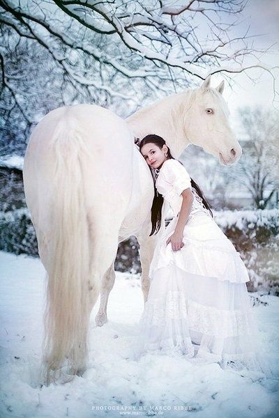 Dreamy white horse in the white snow with bride in white dress. This is beautiful horse photography.