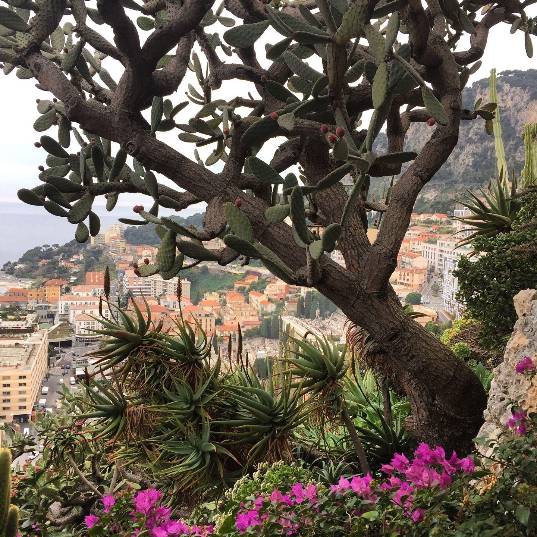 Jardin Exotique De Monaco Avec Images Jardin Exotique Jardin