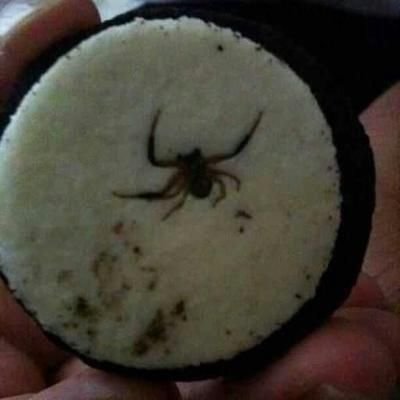 This is why you always take oreos apart before eating them, always. Now think of all the oreos you've ever eaten foolishly. (via Mike Shea, facebook)