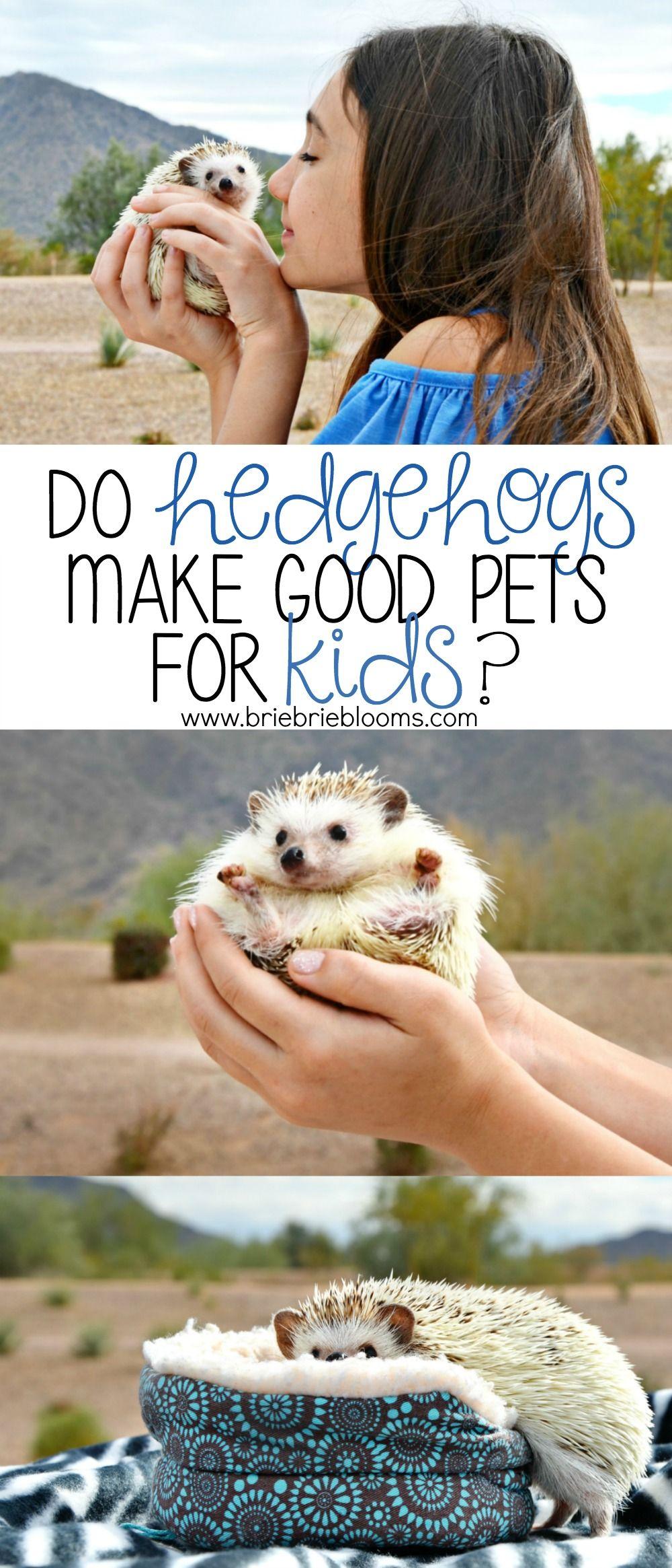 Do Hedgehogs Make Good Pets for Kids Best pets for kids
