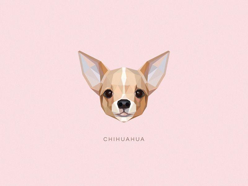 Dibujo De Chihuahua: Chihuahua Tatuaje, Perros