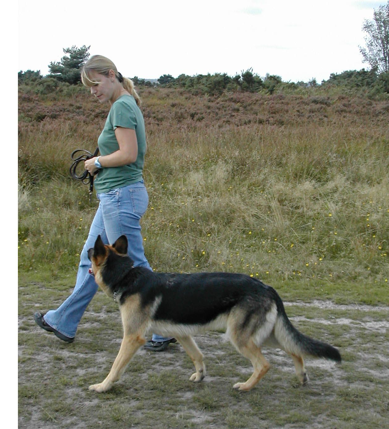 Gsd Cassis Training Your Dog Your Dog Dogs
