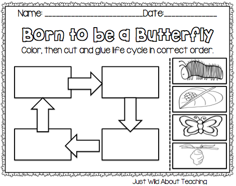 Just Wild About Teaching: Bopping for Butterflies