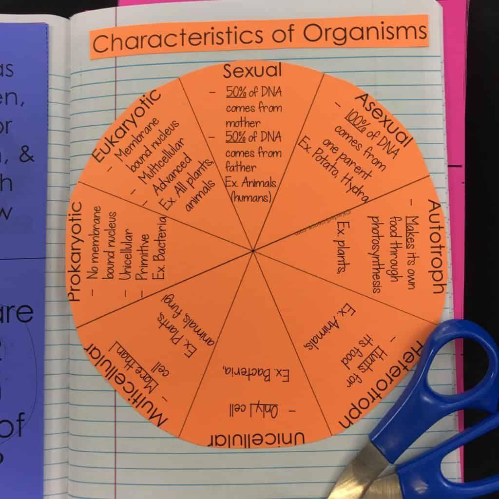 Characteristics Of Organisms Lesson Plan