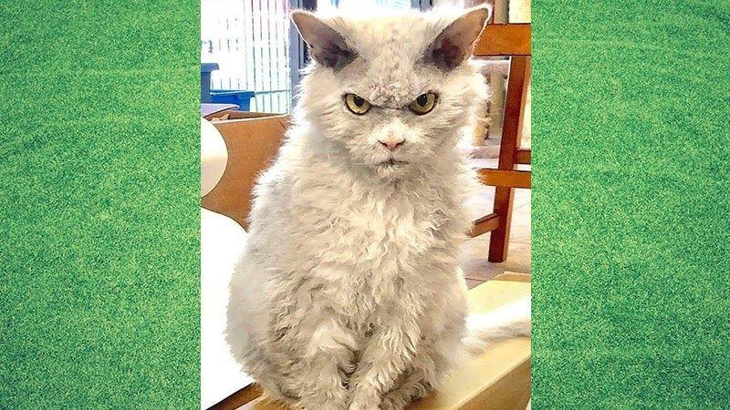 Gambar Kucing Yang Mudah Digambar Kumpulan Gambar Kucing Lucu Dan Imut Yang Menggemaskan Kepogaul 50 Gambar Mewar Menggambar Kucing Kucing Gambar Kucing Lucu