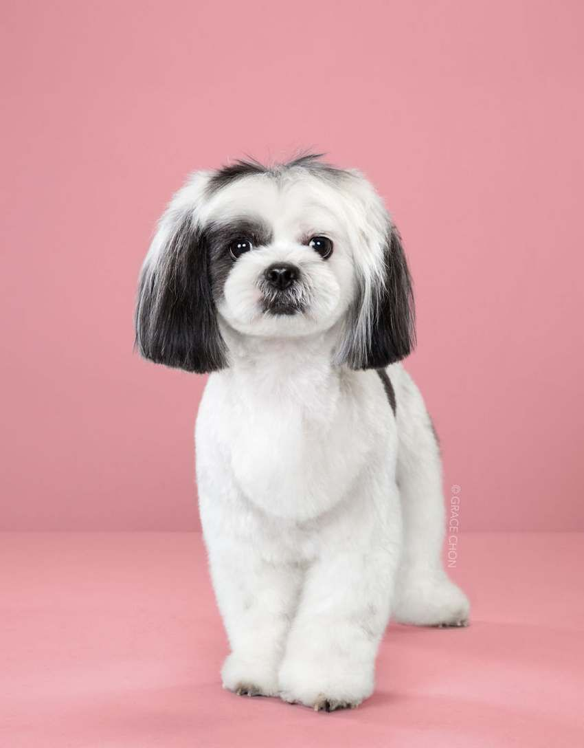 Dogs Before And After Japanese Grooming Https Lifesprism Com Dogs Japanese Grooming Japanese Dog Grooming Cute Dogs Dog Haircuts