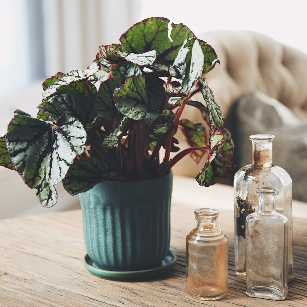 Home decor plants ideas   Houseplants that Can Survive Urban Apartments Low Light and Under
