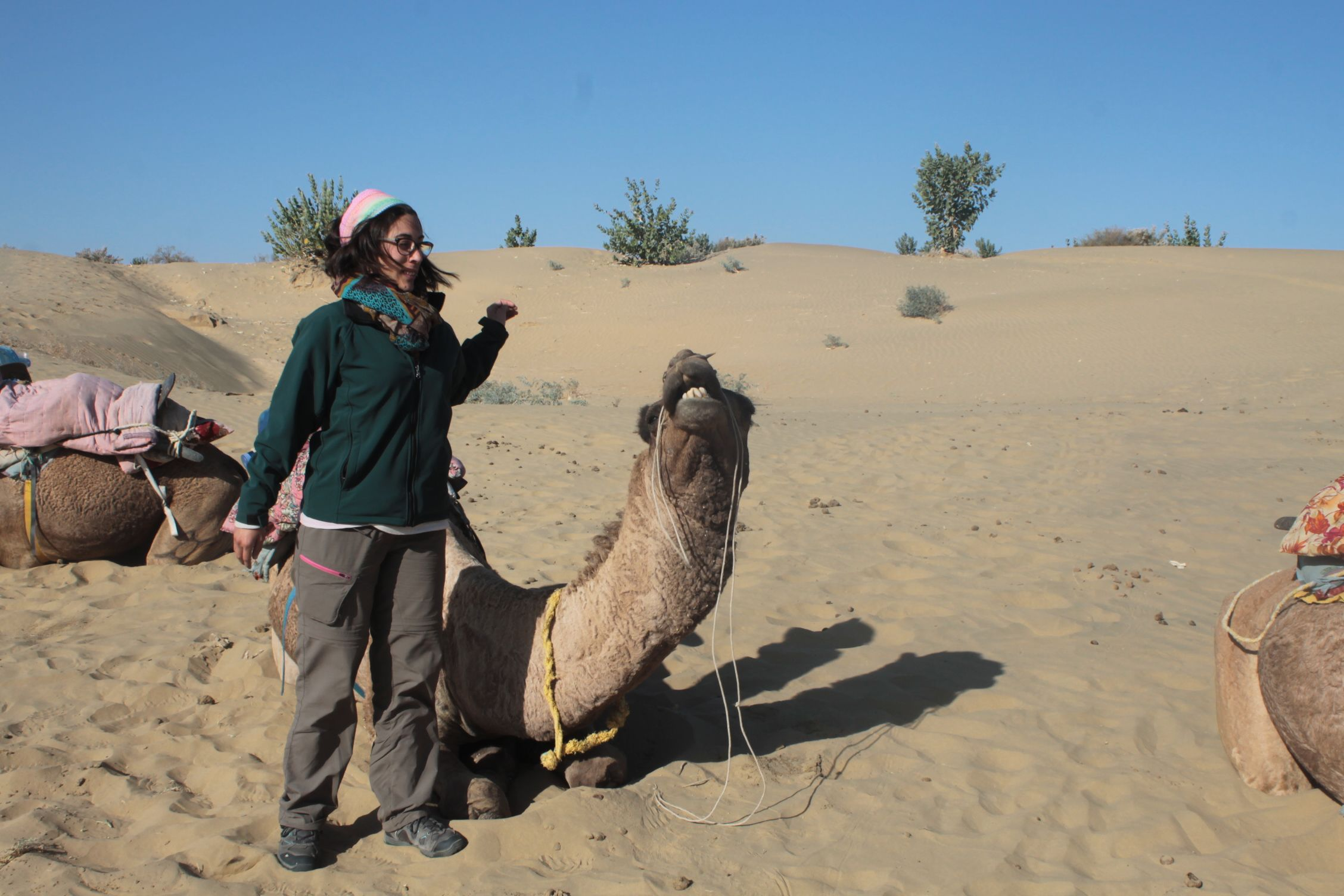 Roser peleando con su camello
