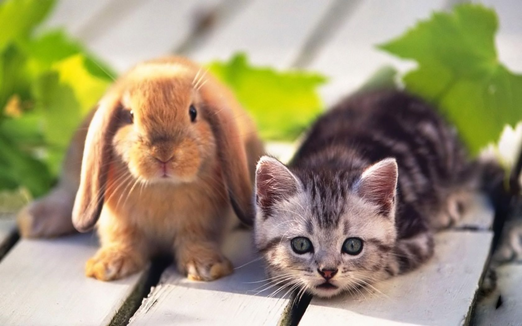 Enjoy this morning kitten Cute puppies and kittens Free Books