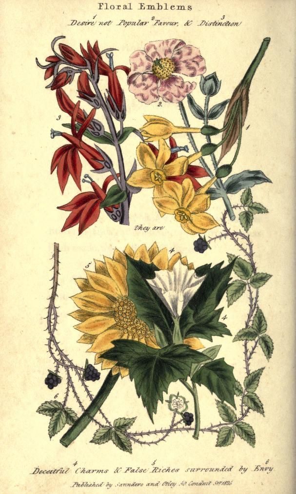 Floral emblems Flower meanings, Flowers, Victorian gardens