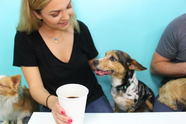Dog lover's dream come true! America's First Dog Café Lets You Drink Coffee And Cuddle Adoptable Dogs | Barkpost