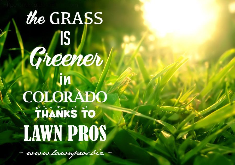 Lawn Pros 3335 Landmark Lane Colorado Springs Co 719 963