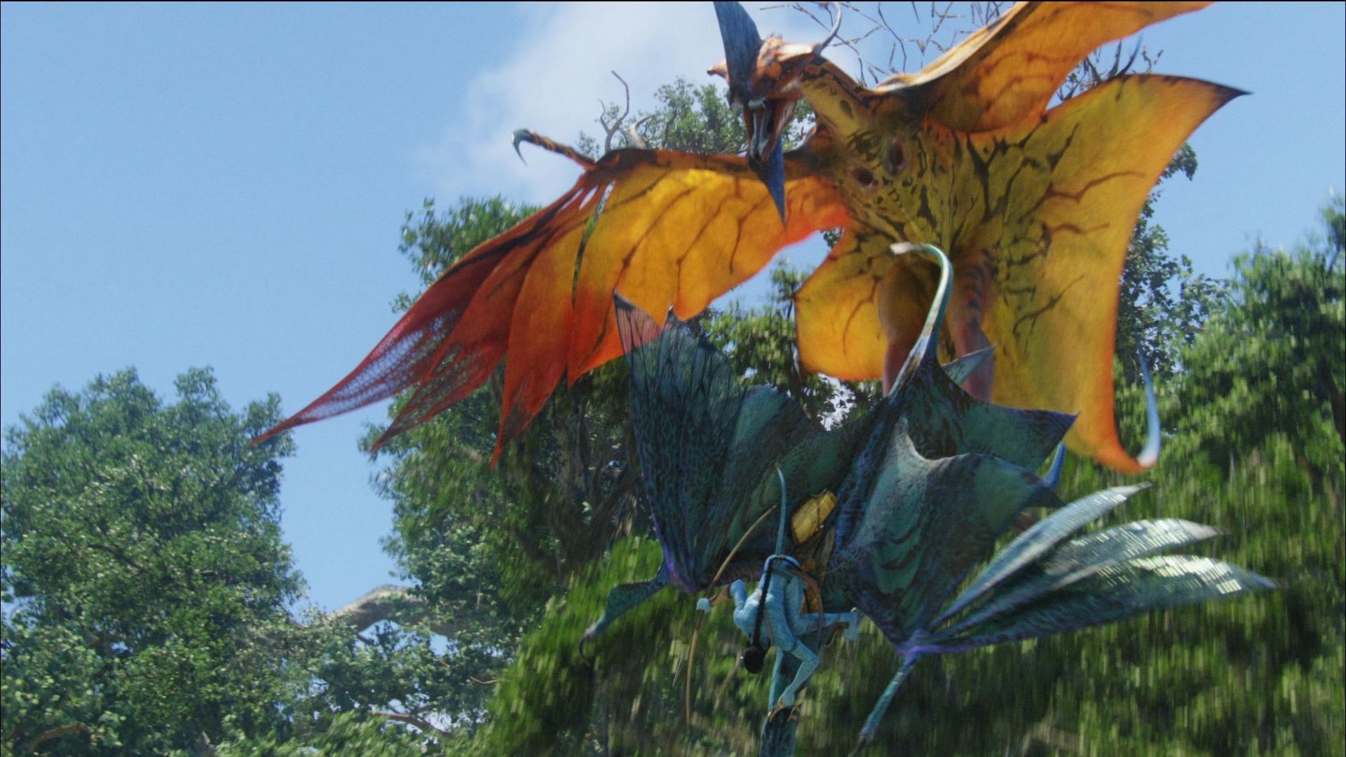 avatar leonopteryx