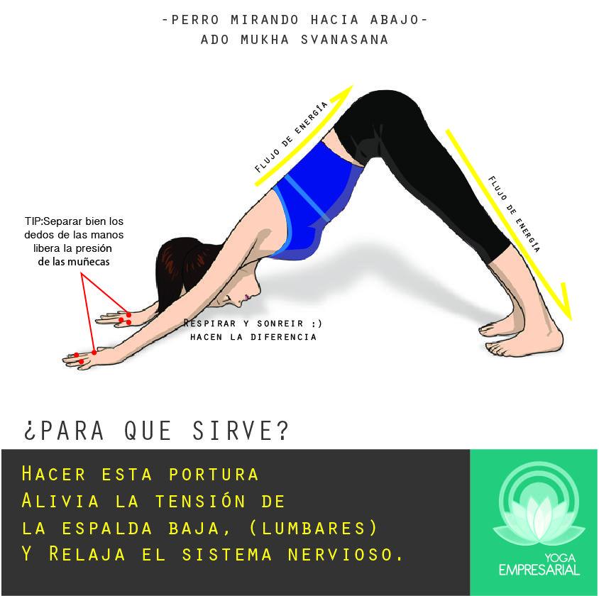 Posturas De Yoga Perro Mirando Hacia Abajo Downward Facing Dog Yoga Benefits Naam Yoga Http Www Yogaempresar Yoga Benefits Hot Yoga Poses Yoga Techniques