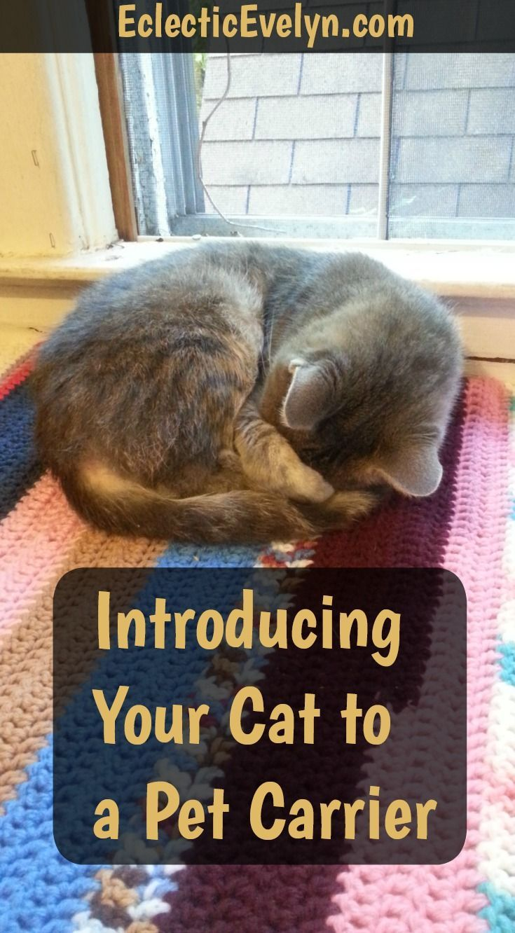 Introducing Your Cat to A Pet Carrier Pet carriers, Cute