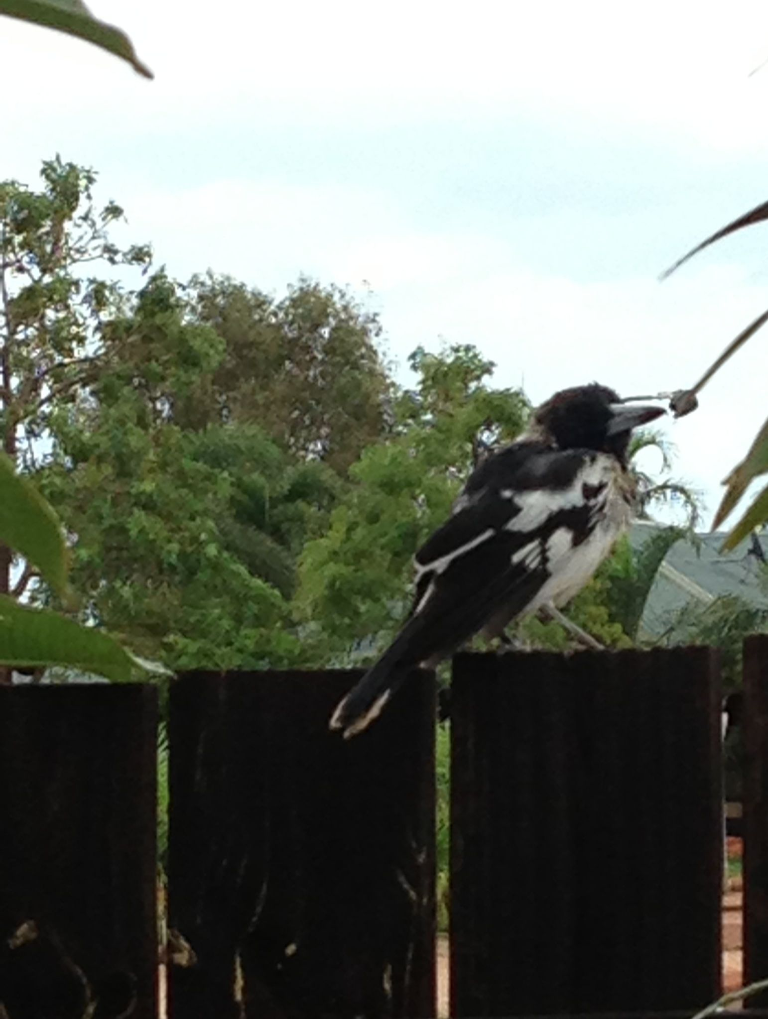 Bird sitting on a fence!