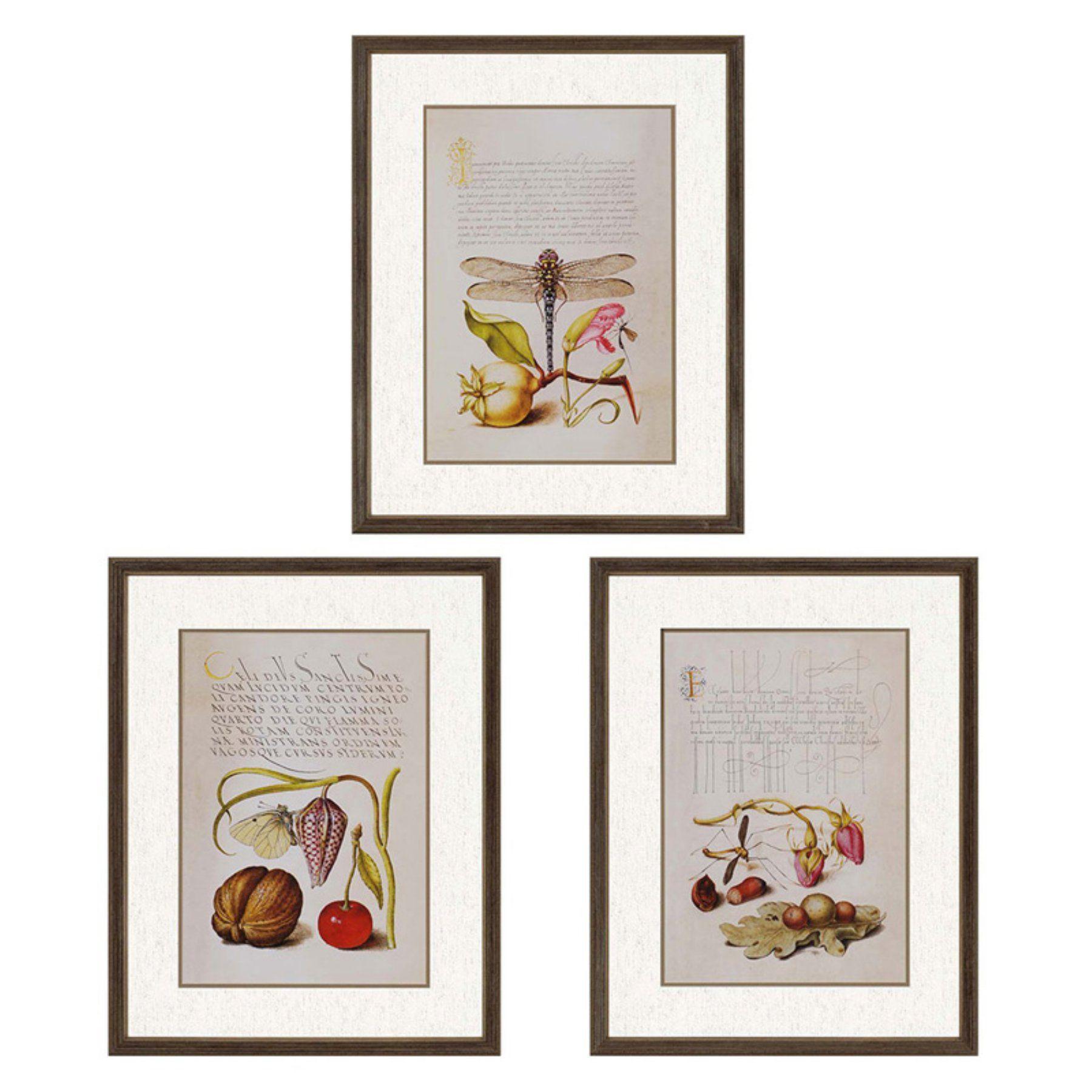 Paragon decor vintage botanicals framed wall art set of
