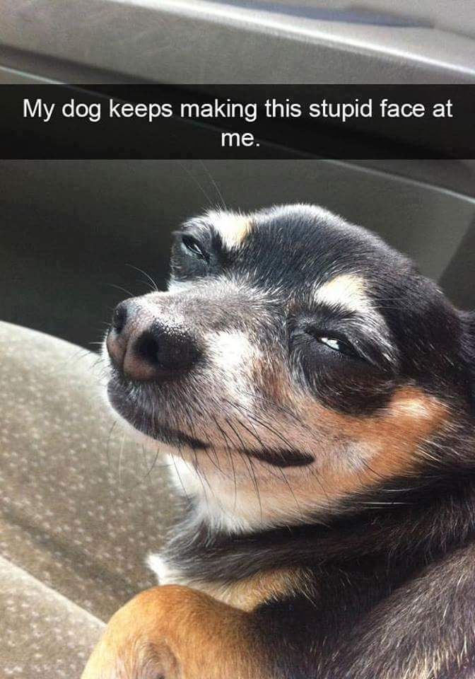 Funny dog face meme - photo#29