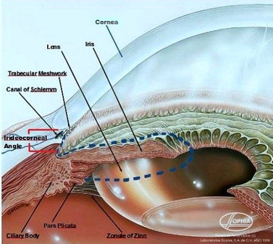 Science of the eye loveyoureyes love your eyes pinterest explore parts of the eye iris eye and more ccuart Gallery