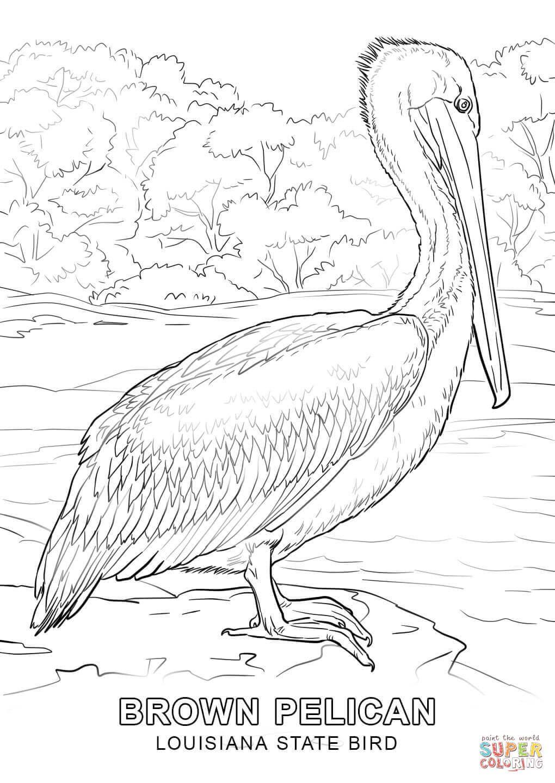 Louisiana State Bird Coloring Page Jpg X